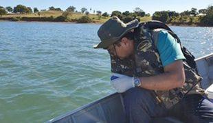 Peixes mortos no Rio Paraná fazem parte do descarte seletivo feito pelos pescadores