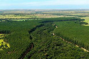 Eldorado Brasil divulga Relatório de Sustentabilidade 2020